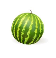 watermelon realistic vector image vector image