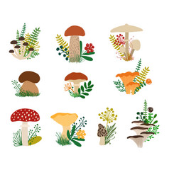 Autumn collection or forestl mushrooms and plants vector