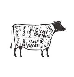 cuts beef cow or bull butcher shop meat vector image