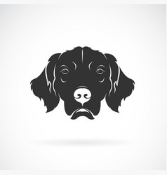 dog head golden rretriever on a white background vector image