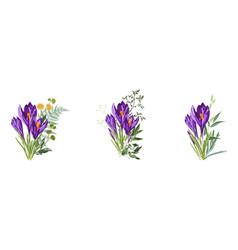 Set purple spring crocus flowers bouquet vector