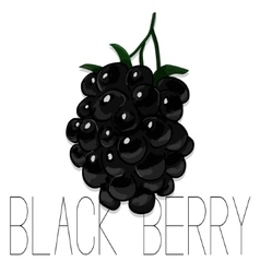 Hand drawn watercolor painting blackberry vector