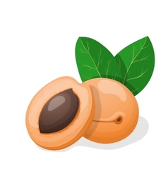 Apricots with leaves vector