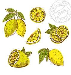 hand drawn lemon fruits vector image