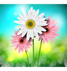 Natural background with gerberas vector image