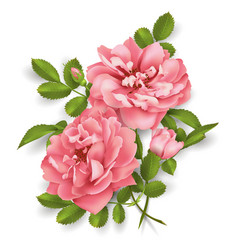 Realistic pink rose 3d roses vector