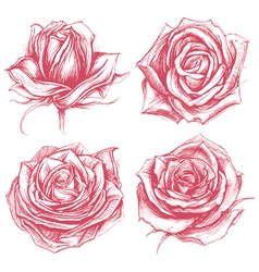 Roses Drawing Set vector
