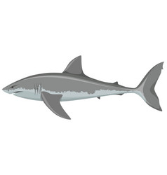 big white shark vector image