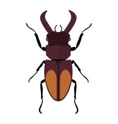 Beetle bug insect isolated on white vector