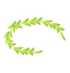 olive laurel icon isometric style vector image