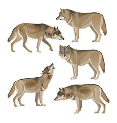 Set of gray wolves vector