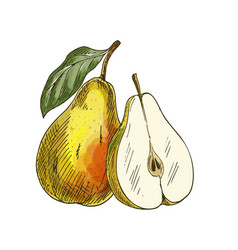 yellow pear with leaf and half of fruit vector image