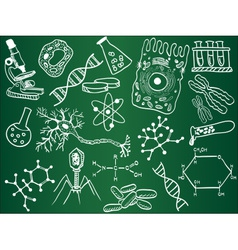 Biology sketches on school board vector image