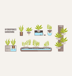 Collection of green plants growing in pots with vector
