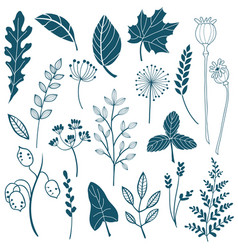 Sketch style botany collection vector