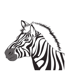 zebra drawing icon vector image