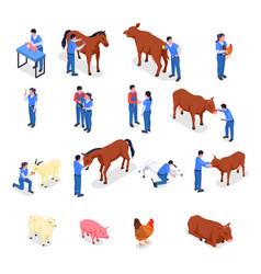 Farm animals veterinary colored isometric icon set vector