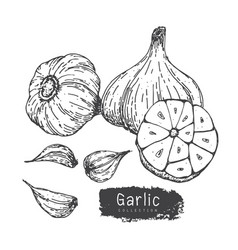 garlic set 2 vector image