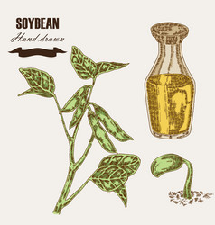 Hand drawn soy plant soybean and soy oil in glass vector