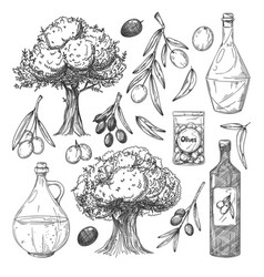 olive oil production sketches set vector image