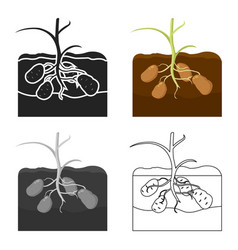 Potato icon cartoon single plant icon from the vector