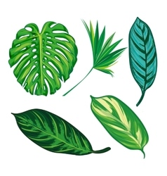 Tropical Leaves Collection isolate Set vector image