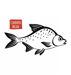 Common bream black and white vector