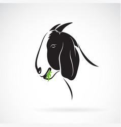 goat head that is eating grass on white vector image