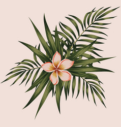 plumeria and leaves composition spring vector image