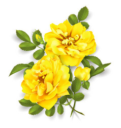 realistic yellow rose 3d roses vector image