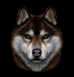 Color graphic portrait siberian husky vector