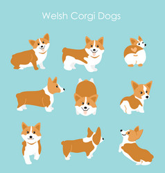 cute and happy welsh corgi vector image