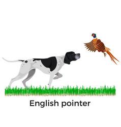 English pointer vector