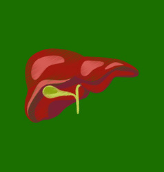 flat shading style icon liver vector image