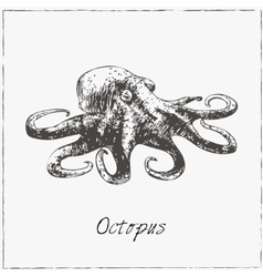 Octopus Hand drawn sketch Collection of seafood vector image