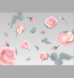 pinkr ose falling flowers and buds vector image