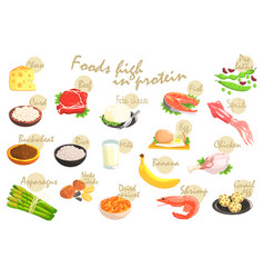 Food rich in proteins poster vector