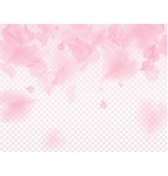 pink sakura petals transparent background a lot vector image