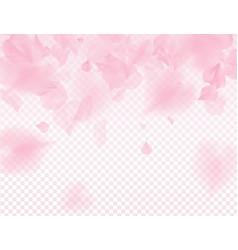 Pink sakura petals transparent background a lot vector