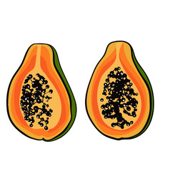 Tropical with papaya print vector