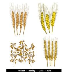 Cereals vector image