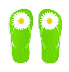 Flip Flops With Camomile vector image vector image