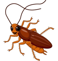 Cute Cockroach isolated on white background vector image vector image