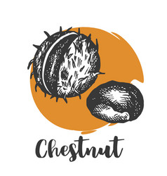 chestnut drawing engraving hand vector image