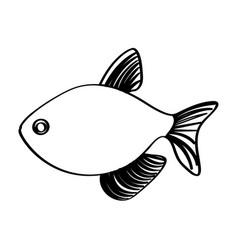 Monochrome line contour with fish vector