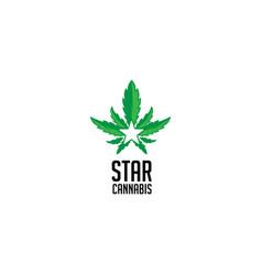 star cannabis logo vector image