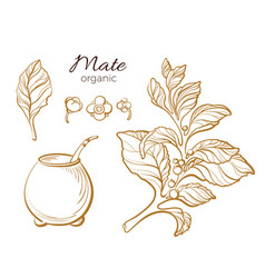 set mate cup gold vector image