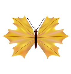 A butterfly with a maple leaf vector image vector image