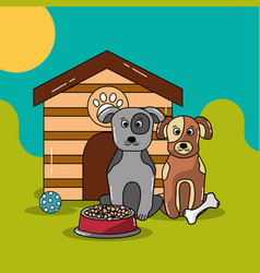 Pets dog and cat vector