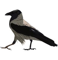 walking black crow vector image vector image